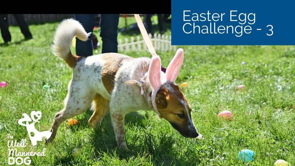 Egg on a walk – Proof your dog's walking skills