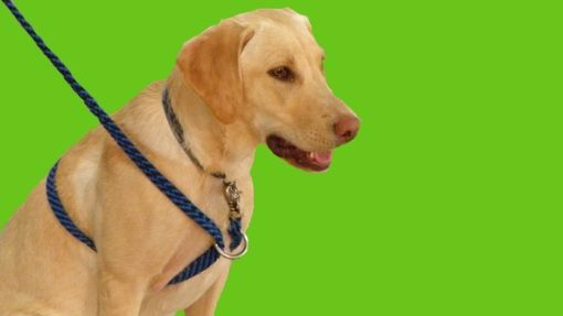 The safety and advantages of different Types of Leashes