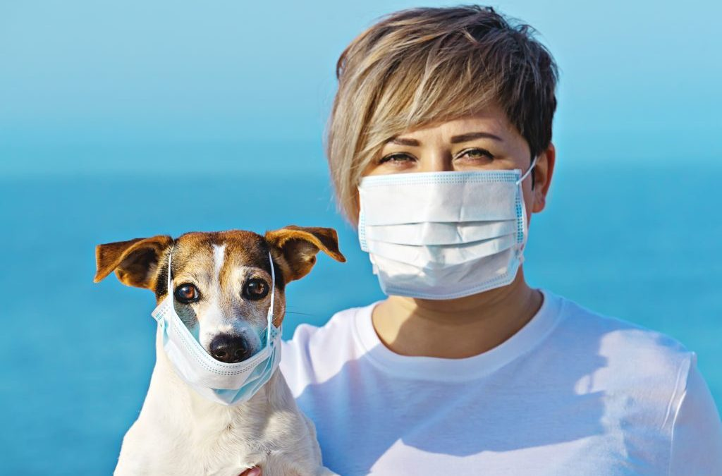 Face-Masks – How your dog perceives masked people