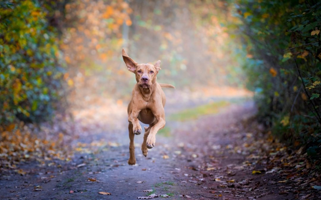 Come – Games that have your dog coming in fast