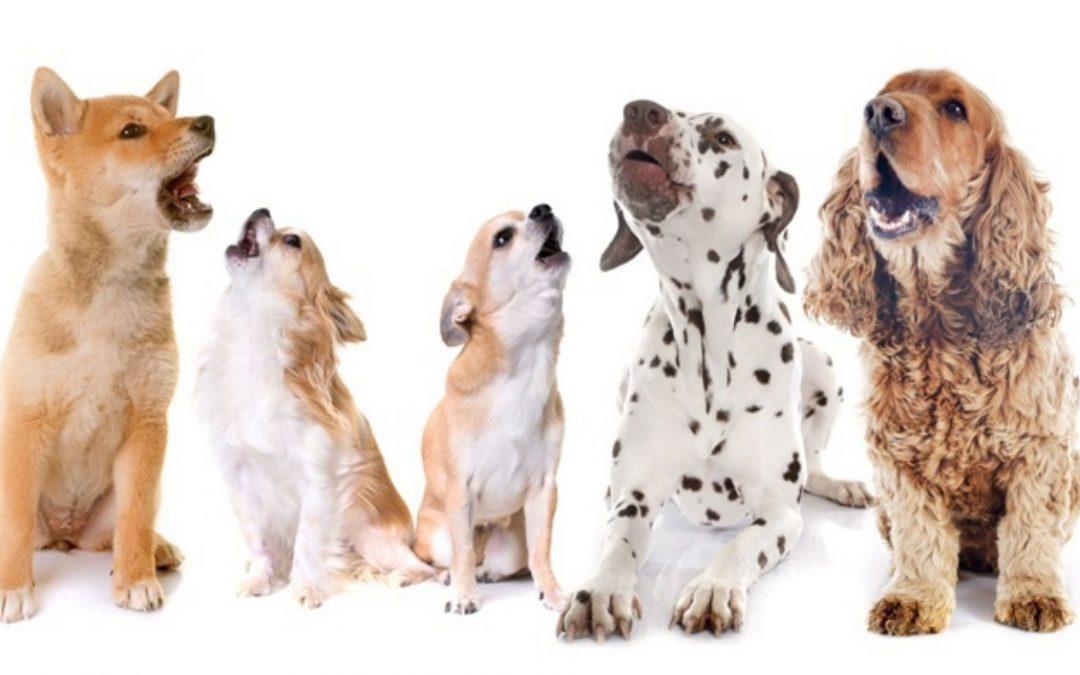 """Barking – """"ruff, ruff"""""""