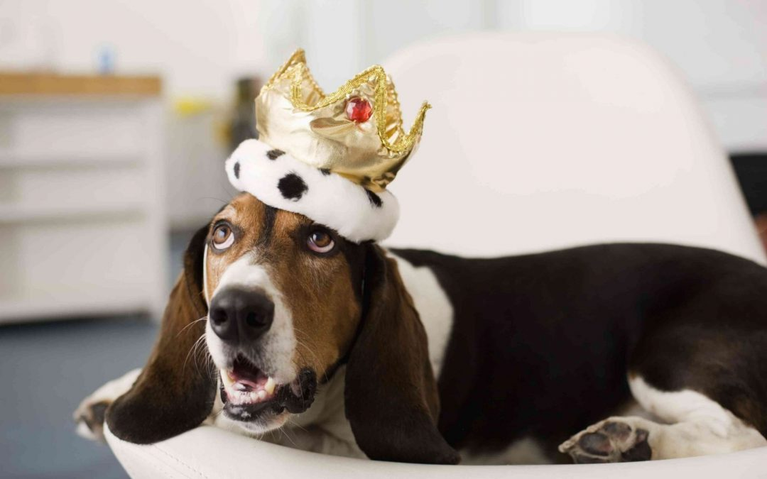 Confidence is King when it come to your dog's behavior